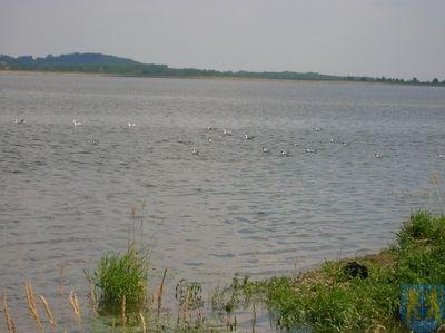 Zbiornik Topola 3