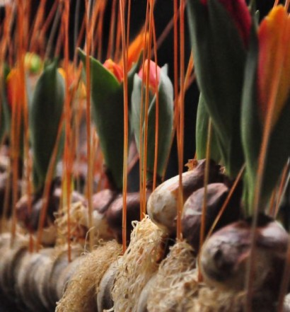 Bezpłatne warsztaty florystyczne_02