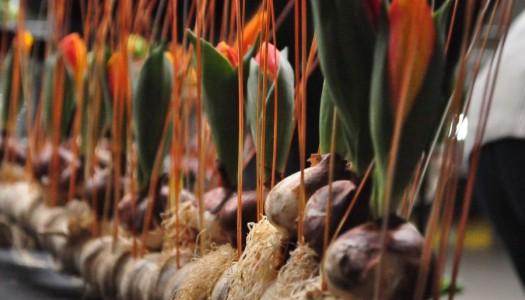 Bezpłatne warsztaty florystyczne