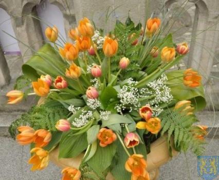 Tulipanowy zawrót głowy część 1 (103)
