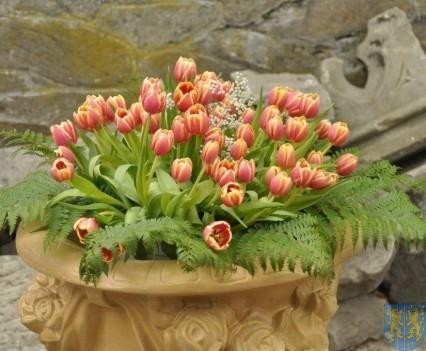 Tulipanowy zawrót głowy część 1 (115)