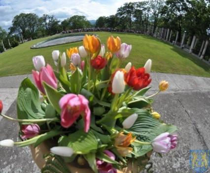 Tulipanowy zawrót głowy część 1 (175)