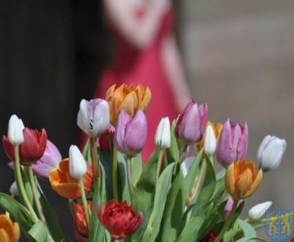Tulipanowy zawrót głowy część 1 (181)