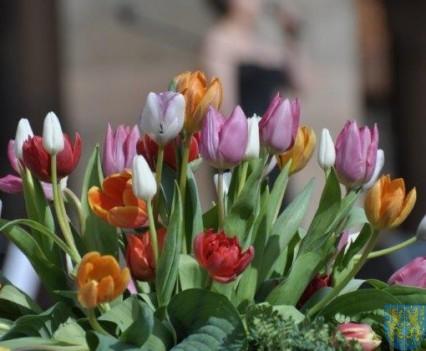 Tulipanowy zawrót głowy część 1 (183)