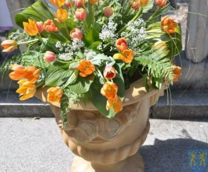 Tulipanowy zawrót głowy część 1 (36)