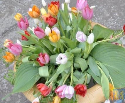 Tulipanowy zawrót głowy część 1 (86)