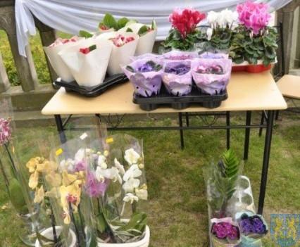 Tulipanowy zawrót głowy część 1 (93)
