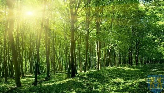 Po lesie i parku można już chodzić