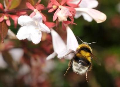 Pszczoły proszą o pomoc_01