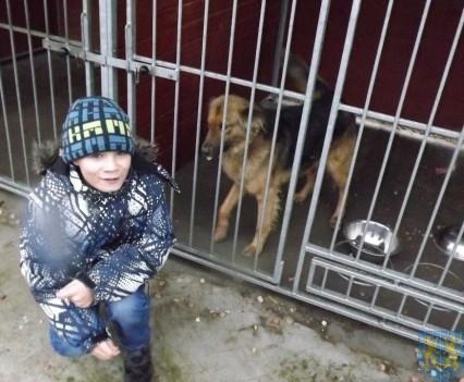 Pomagamy zwierzętom (10)