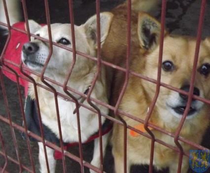 Pomagamy zwierzętom (4)