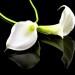 Nie umiera ten kto trwa w sercach i pamięci naszej