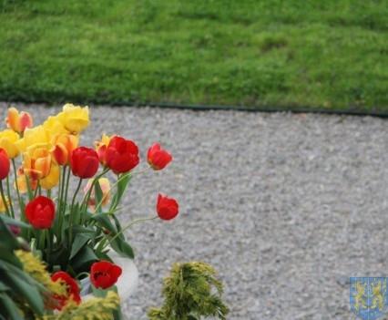 Święto Tulipanów 2017 niedziela (1)