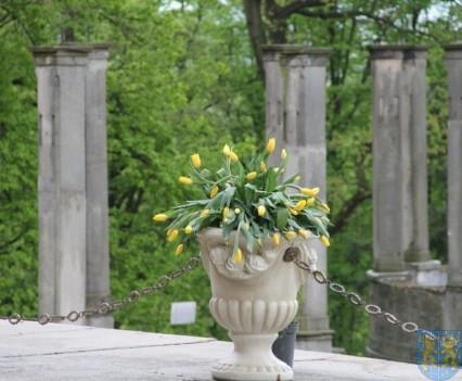 Święto Tulipanów 2017 niedziela (12)