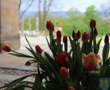 Święto Tulipanów 2017 niedziela (124)