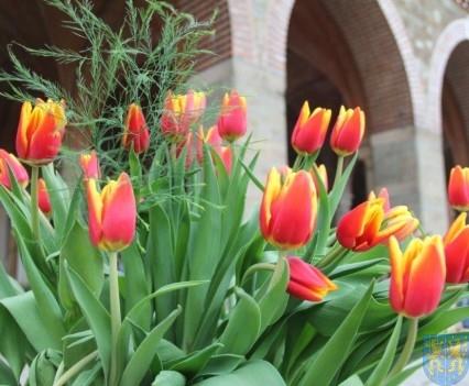 Święto Tulipanów 2017 niedziela (21)