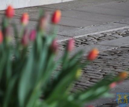 Święto Tulipanów 2017 niedziela (3)