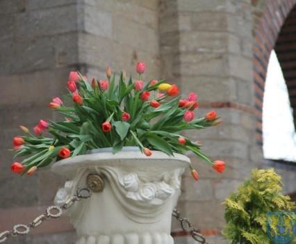 Święto Tulipanów 2017 niedziela (31)