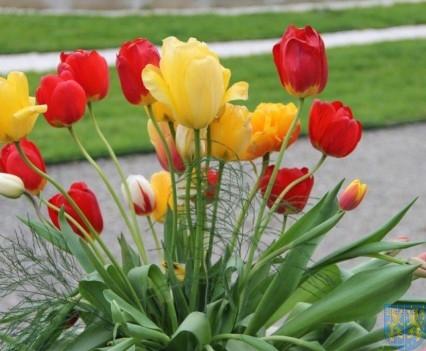 Święto Tulipanów 2017 niedziela (32)