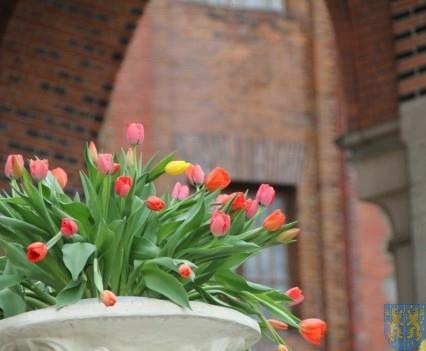 Święto Tulipanów 2017 niedziela (35)