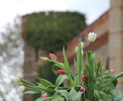 Święto Tulipanów 2017 niedziela (36)