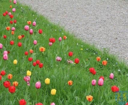 Święto Tulipanów 2017 niedziela (38)