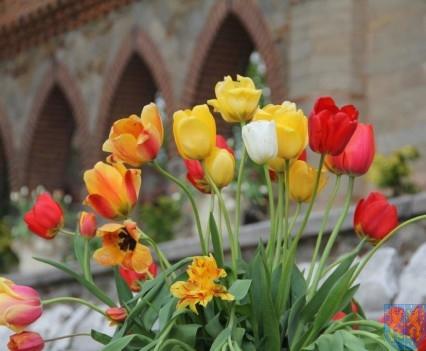 Święto Tulipanów 2017 niedziela (5)