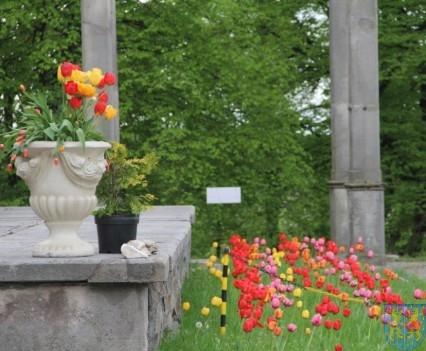 Święto Tulipanów 2017 niedziela (61)