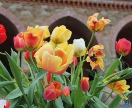 Święto Tulipanów 2017 niedziela (62)