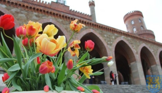 Święto Tulipanów 2017: niedziela