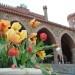 Święto Tulipanów 2017 niedziela (63)