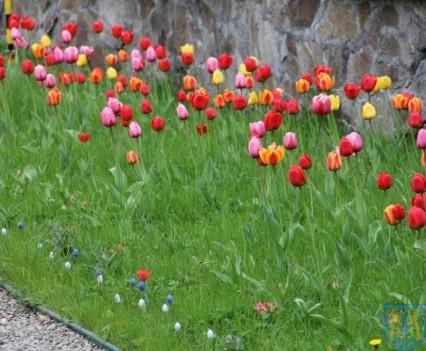 Święto Tulipanów 2017 niedziela (90)