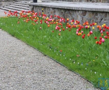 Święto Tulipanów 2017 niedziela (91)