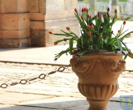 Święto Tulipanów 2017 sobota (106)