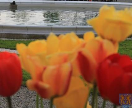 Święto Tulipanów 2017 sobota (142)