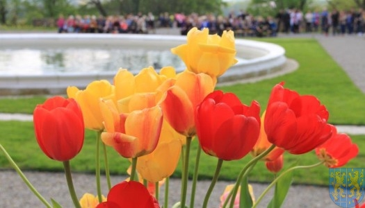 Święto Tulipanów 2017: sobota