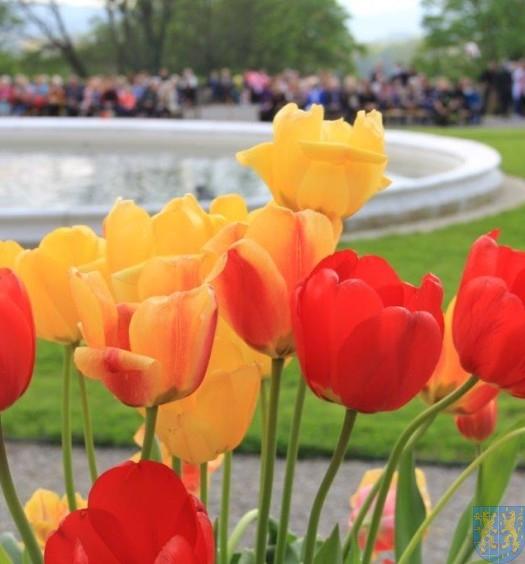 Święto Tulipanów 2017 sobota (143)