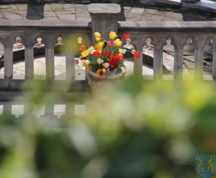 Święto Tulipanów 2017 sobota (16)