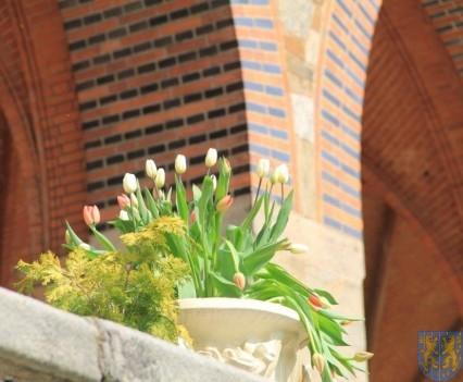 Święto Tulipanów 2017 sobota (24)