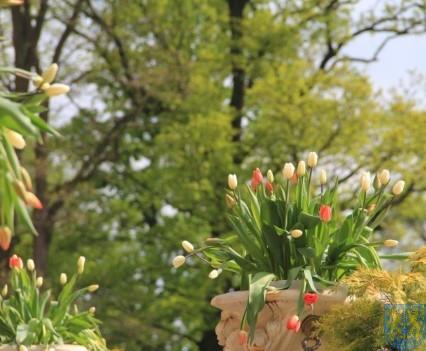 Święto Tulipanów 2017 sobota (26)