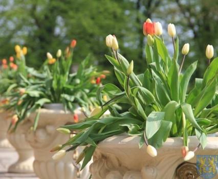 Święto Tulipanów 2017 sobota (30)