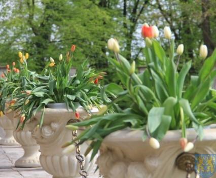 Święto Tulipanów 2017 sobota (32)