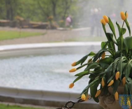 Święto Tulipanów 2017 sobota (34)