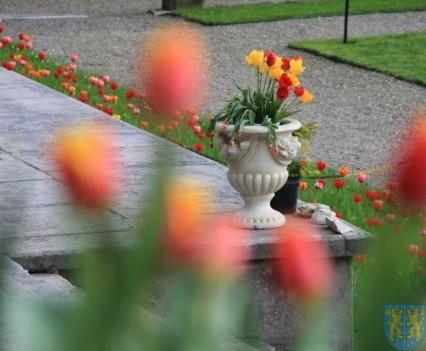 Święto Tulipanów 2017 sobota (37)