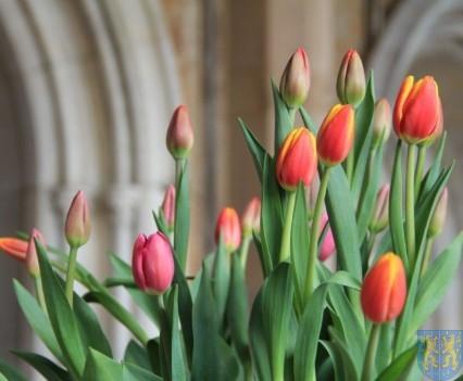 Święto Tulipanów 2017 sobota (39)