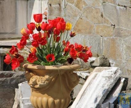 Święto Tulipanów 2017 sobota (4)