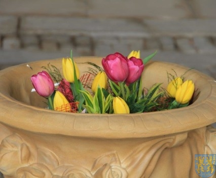 Święto Tulipanów 2017 sobota (44)