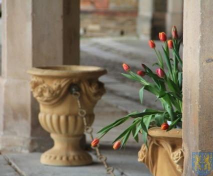Święto Tulipanów 2017 sobota (46)