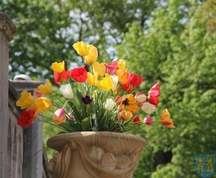 Święto Tulipanów 2017 sobota (5)