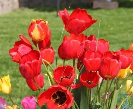 Święto Tulipanów 2017 sobota (6)